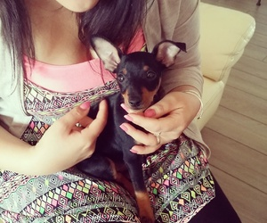 chiot, puppy, and tomy image