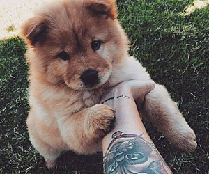 adorable, dog, and lovely image