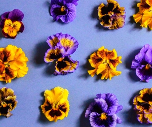 beauty, blooms, and color image