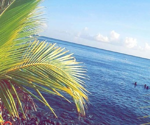 🌴, beach, and guadeloupe image