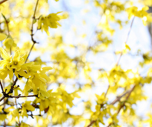 april, lovely, and yellow image