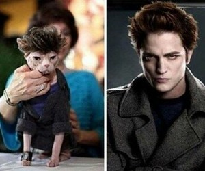 edward cullen and cat image