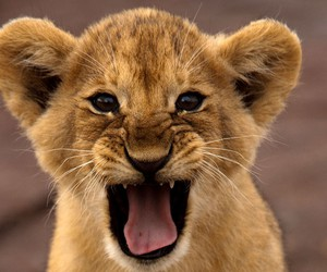 baby and lion image