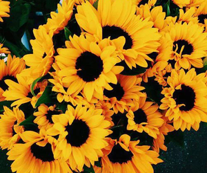Flowers Yellow And Sunflower Image