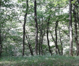 forest, trees, and beautifull nature image