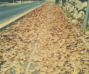 automn, falling leaves, and street image