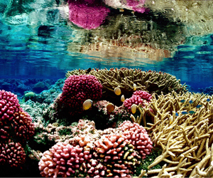 ocean, coral, and sea image