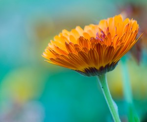 colorful, orange, and flower image