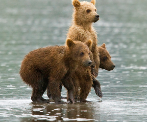 bear, animals, and cute image