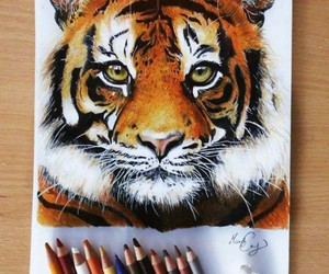 drawing, art, and tiger image