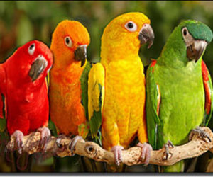 bird, parrot, and colorful image