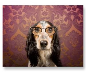 adorable, dog, and intelligence image