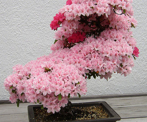 flowers, pink, and bonsai image