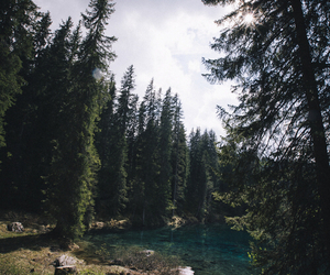 nature, forest, and indie image