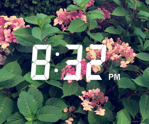 flowers, snap chat, and my image