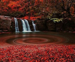 red, beautiful, and nature image