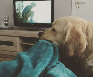 cosy, golden retriever, and wild image