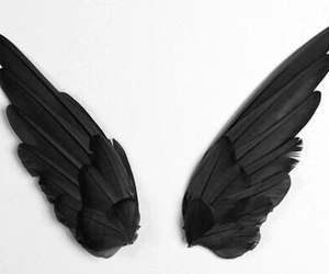 wings, black, and angel image
