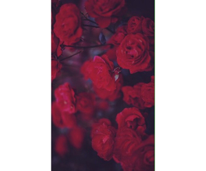 background, flowers, and homescreen image