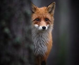 beautiful, fox, and tree image