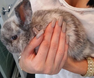 nails, bunny, and animal image