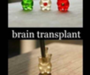 funny and gummy bears image