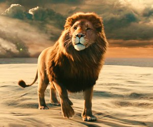 lion, narnia, and book image