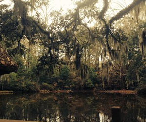 bayou and national geographic image