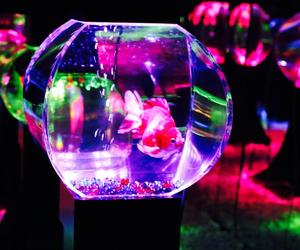 japan, pink, and goldfish aquarium image