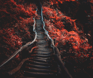 nature, red, and autumn image