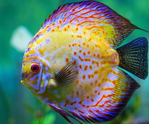 تفسير السمك الكبير في الحلم رؤية سمكه كبيره في المنام