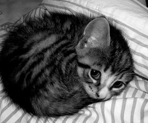 b&w, cat, and cute image