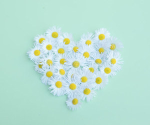 flowers, heart, and pastel image
