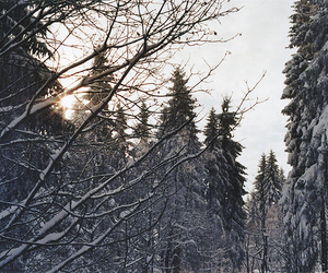 december, nature, and forest image