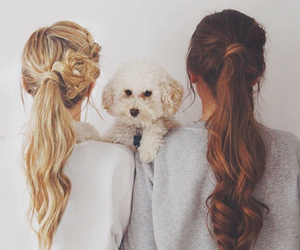 hair, dog, and friends image