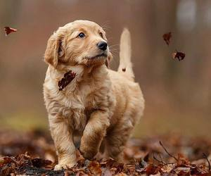 dog, leaves, and puppy image