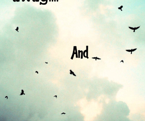 bird, fly, and free image