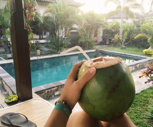 asia, beautiful, and palmtree image