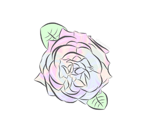flower, pastel, and rose image