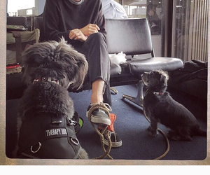 airport, couple, and dogs image