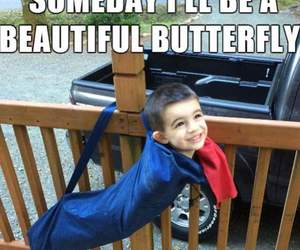 butterfly and funny image