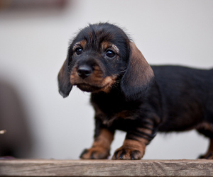cute and puppy image