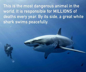 shark, humans, and true image