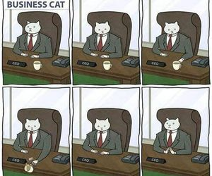 cat, funny, and business image