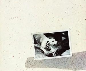 album, band, and tusk image