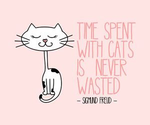 cat, quote, and time image
