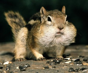 animal, squirrel, and funny image