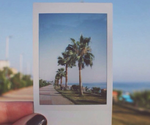 breeze, canon, and palm trees image