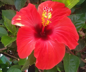 nature, rouge, and tropical image