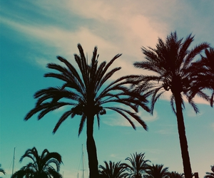 clouds, palm, and palm tree image